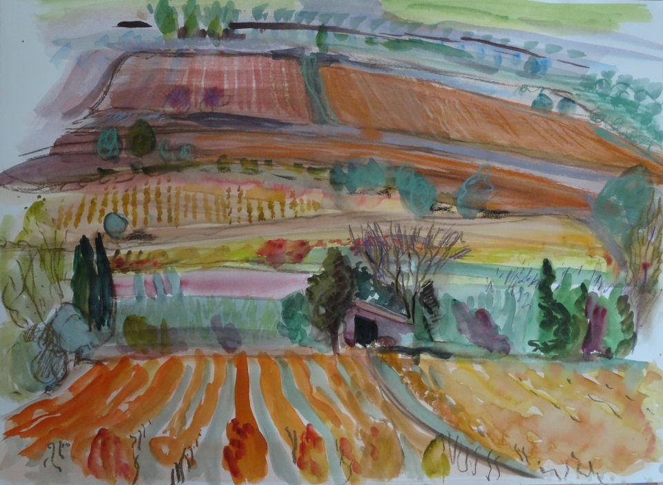 Vines near Lagrasse, watercolour 56 x 76 cm